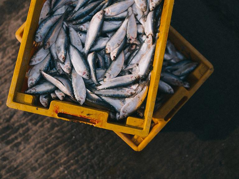 Pesci morti in cassetta insanguinata